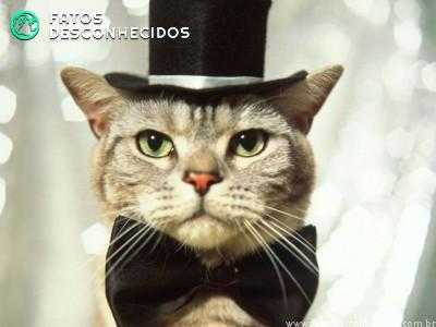 cat-in-top-hat-636