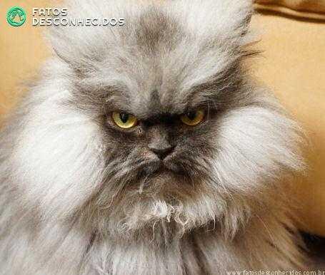 evil-cat2