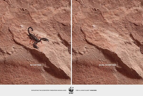 anuncio-animal-11