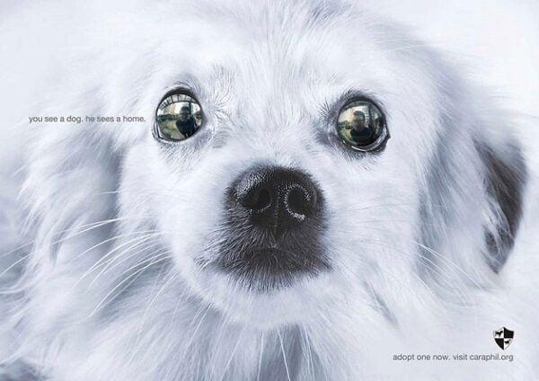 anuncio-animal-32
