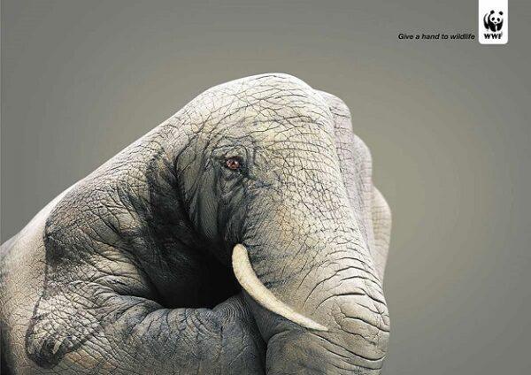 anuncio-animal-43