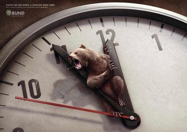 anuncio-animal-5