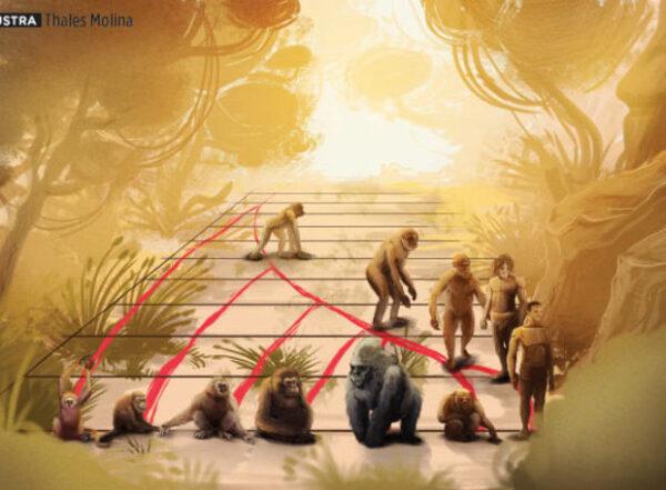 esquema da evolução do homem macaco