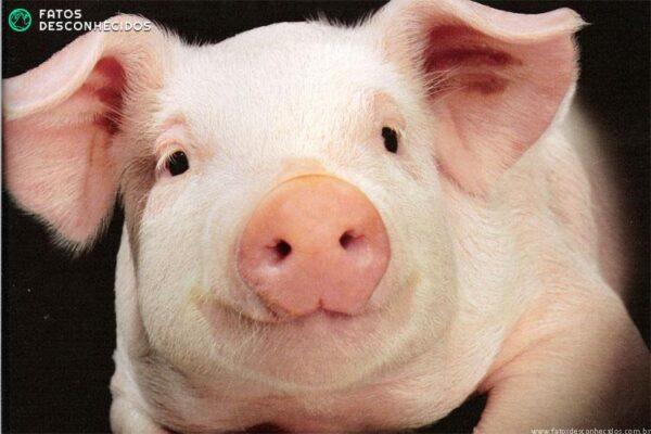 Belo-Porco