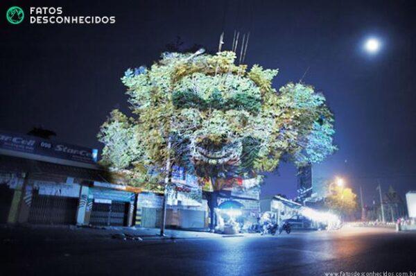 CambodianTrees10