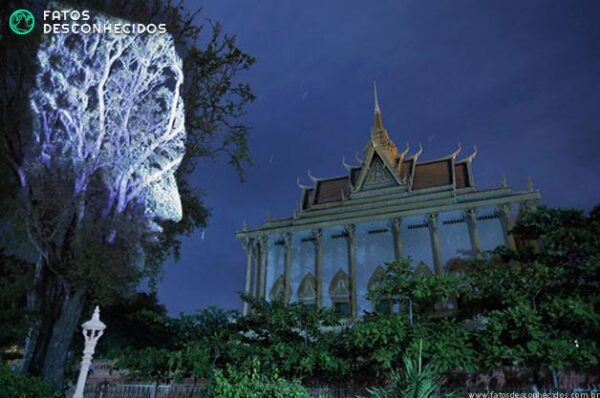 CambodianTrees11