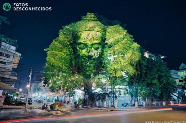 CambodianTrees3
