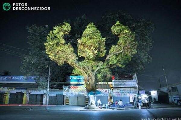 CambodianTrees8