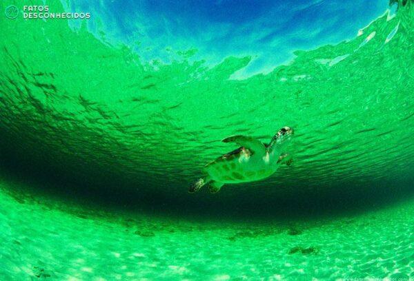 a_wild_green_sea_turtle