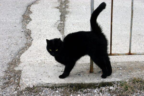 black-cat1