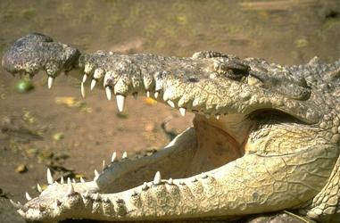 croc-tm