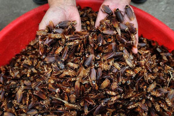 la-fg-c1-china-cockroach-photo1