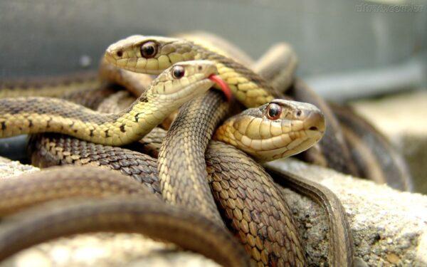 48024_Papel-de-Parede-Cobras_1440x900