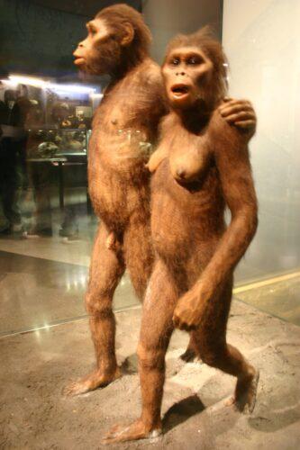 Australopithecus-e1372127570195