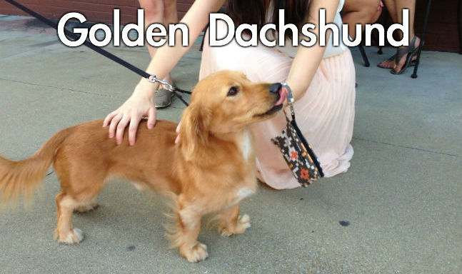 Picture Quiz Dog Breeds