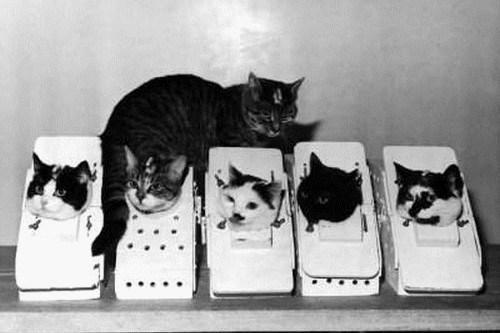 NASA-Cats