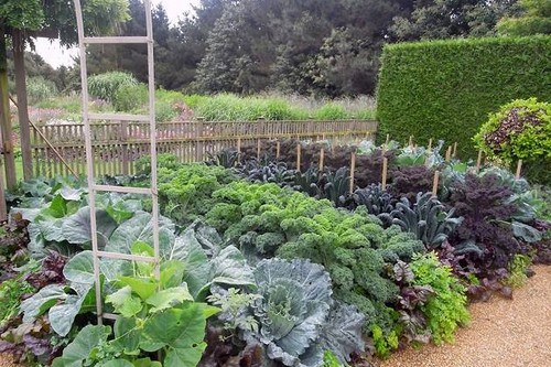 Organic-Vegetable-Garden