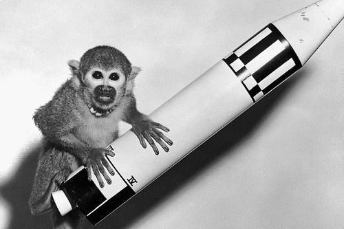Space-monkey-Baker