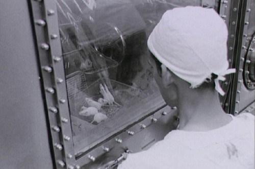 Top-10-Animal-Astronauts
