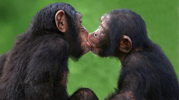 beijo animais