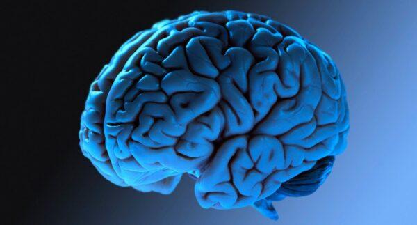 cerebro rugoso
