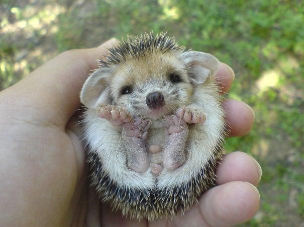 Super Os 30 filhotes de animais mais fofos do mundo e que cabem na palma  VW24