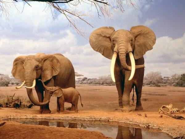elefante1-3