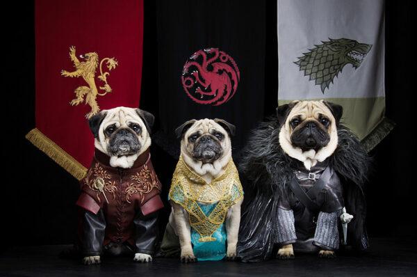 pugs-westeros-game-of-thrones-video-cachorros-6