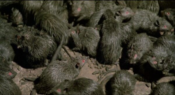 ratos10