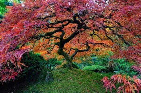 Jardim-de-Portland-localizado-no-parque-de-Washington-em-Oregon-EUA
