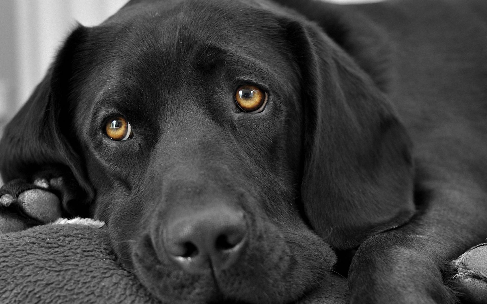 animals_widewallpaper_magic-dog-eyes_71436