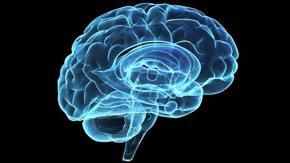 ilustracao-cerebro-raio-x-02-size-598