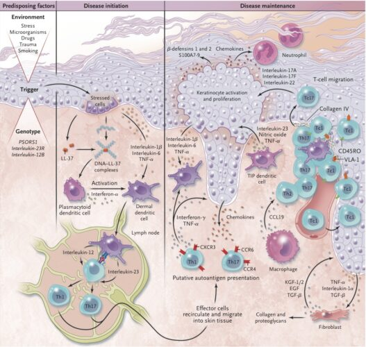 psoriasis-mecanismo