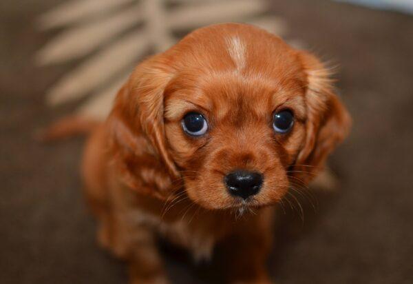 puppy-dog-eyes