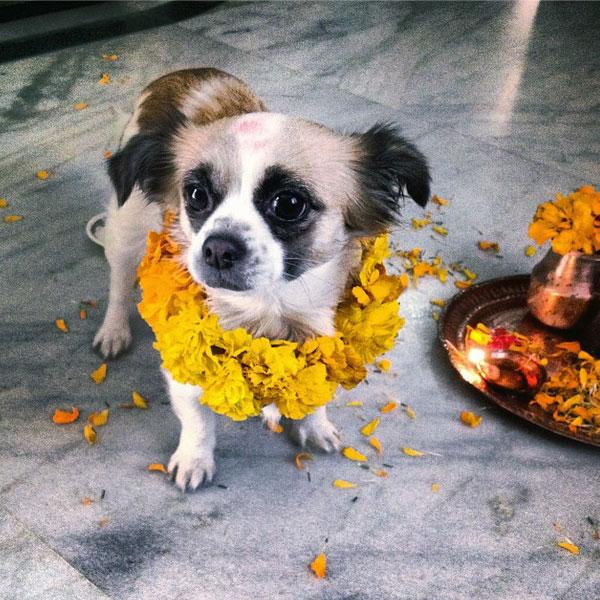 41149-diwali-tihar-dogs-02