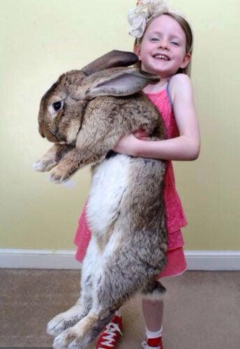 Darius-worlds-biggest-rabbit