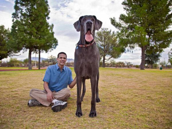 George-worlds-biggest-dog
