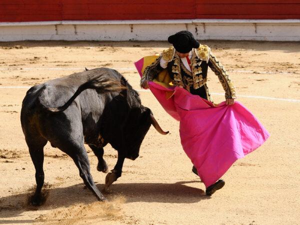 Matador-Bull-Spain