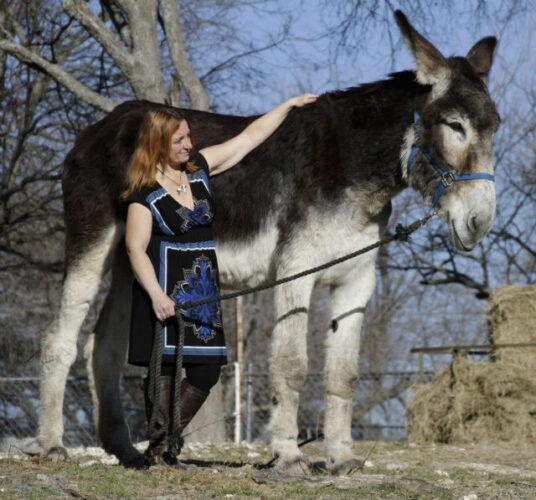 Romulus-the-worlds-biggest-donkey