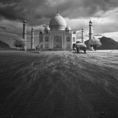 Surreal-journey-through-animals-world__880