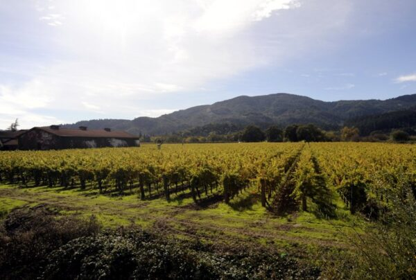 beckham-vineyard