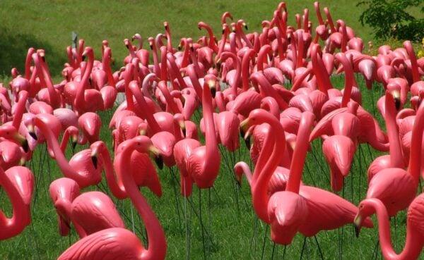 flamingo-e1305558210304