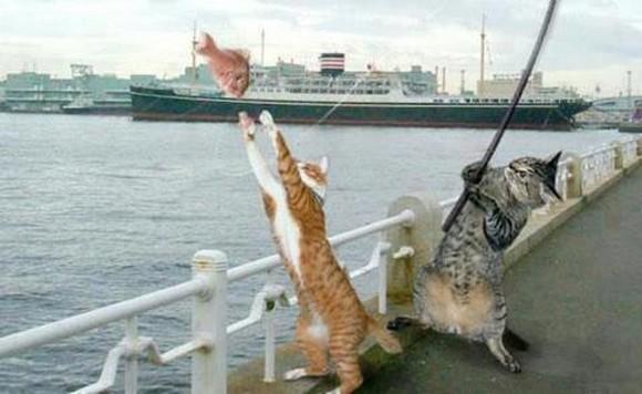 gatospescando