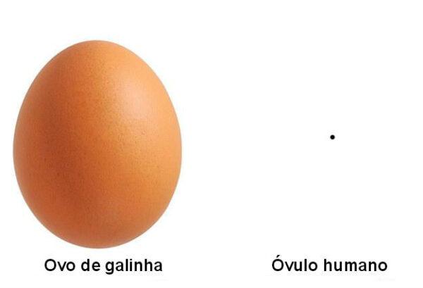 1-ovulo-e