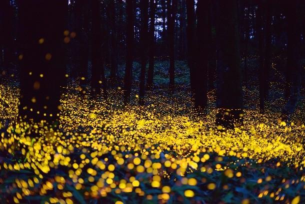 18-fireflies-Yuki-Saro-3-610x407