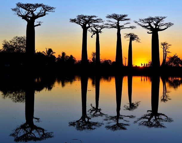 20-hikers-baobab-trees-madagascar_91080_990x742-610x480