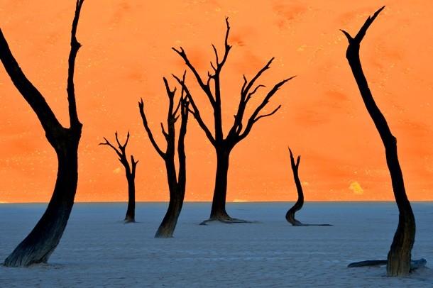 24-namib-desert-20140611-036-_DSC9397-Edit-610x406