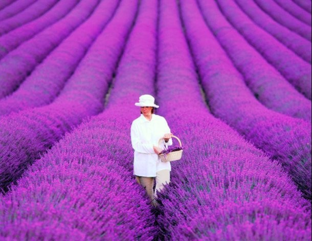 25-lavender-field-provence-france-610x472