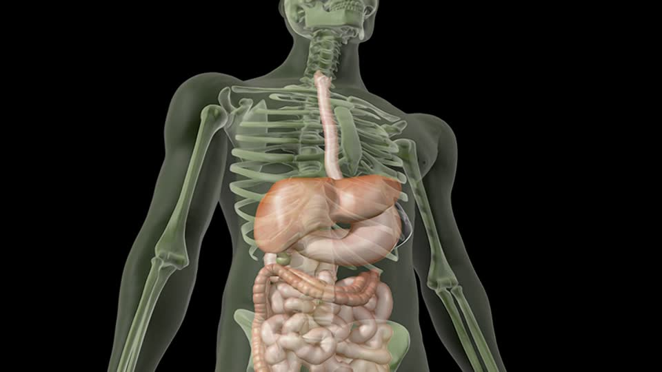 934187388-bazo-vesicula-biliar-higado-esofago