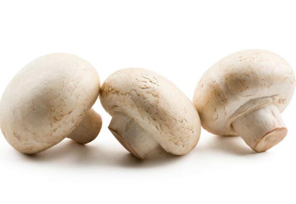 cogumelo champignon conteudo_17218_39816